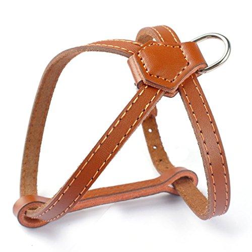 Echtleder Hundegeschirr klassische für kleine Hunde Welpen Anti Zug Brustumfang: 28-36cm Einstellbar Braun