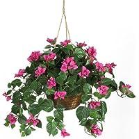 Bougainvillea Hanging Basket seta