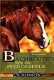 Bachblüten für die Pferdeseele: Entspannung und Linderung durch Bachblüten-Therapie