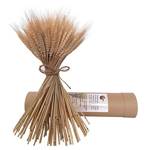 HGF Natürliche Getrocknete Weizen Bunches Flowes für Hochzeit Aufsteller Deko 100Stiele