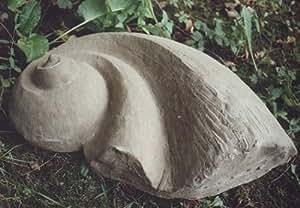 Ammonit doppelt