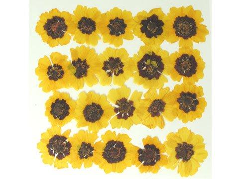 Silver J Pressé, Fleurs Naturelles séchées Jaune multicule, Lot de 2 Confettis de Mariage.
