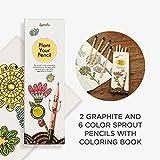 Sprout Pack de lápices de colores para niños | caja de 8 | lápices para colorear y dibujar de madera natural | producto ecológico | lápices plantables | libro para colorear incluido