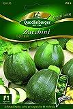 Zucchini Eight Ball - Cucurbita pepo L. QLB Premium Saatgut Zucchini