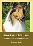 Amerikanische Collies: American Collies in Deutschland