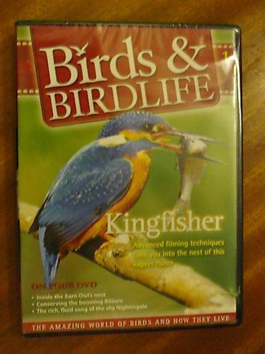 birds-birdlife-kingfisher