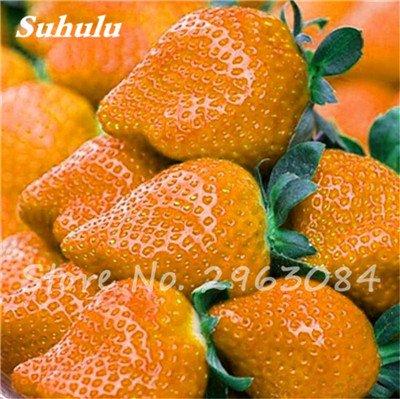 Sementes da Fruta 200 pcs / sac couleur rares fraises graines, les graines de fruits tropicaux, Pot Bonsai Fruit Graines jardin plante 15