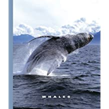 Whales (The World of Mammals) (English Edition)