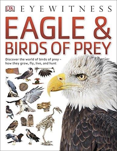 eagle-birds-of-prey-eyewitness