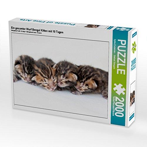CALVENDO Puzzle EIN gesamter Wurf Bengal Kitten mit 10 Tagen 2000 Teile Lege-Größe 90 x 67 cm Foto-Puzzle Bild von Sylke Enderlein - Bethari Bengals -