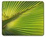 1art1 Palme - Foglie di Palma Tappetino per Mouse (23 x 19cm)