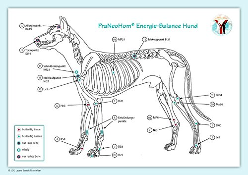 Akupunktur-Tafel Hund: PraNeoHom® Energiebalance durch Heilen mit ()