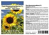 Seedeo Sonnenblume Titan Riesensonnenblume F 1 (Helianthus annuus) 20 Samen