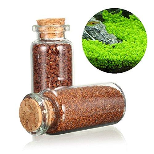 ut Aquarium Fisch Tank Pflanzen Aussichten Gras Seed Grass Landschaftsbau Dekoration-L ()
