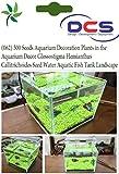 DCS (062) 500 Seeds Aquarium Decoration ...