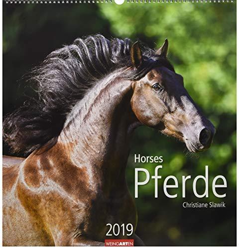 Pferde - Kalender 2019