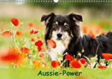 Aussie-Power (Wandkalender 2019 DIN A3 quer): Powerhund Australian Shepherd (Monatskalender, 14 Seiten ) (CALVENDO Tiere)