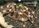 Vogelspinnen (Theraphosidae)CH-Version (Wandkalender 2019 DIN A4 quer): Vogelspinnen mit schönen Fotos in einem Monatskalender (Monatskalender, 14 Seiten ) (CALVENDO Tiere)