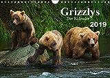 Grizzlys - Der Kalender CH-Version (Wandkalender 2019 DIN A4 quer): Grizzlybären - ein Fotoshooting in der Wildnis Alaskas (Geburtstagskalender, 14 Seiten ) (CALVENDO Tiere) - Max Steinwald