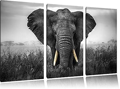 magnifique noir / blanc sur l'image 120x80 sur toile 3-pièces de l'image de toile éléphant, énorme XXL Photos complètement encadrée avec civière, art impression sur murale avec cadre, gänstiger que la peinture ou la peinture à l'huile, pas poster ou une affiche