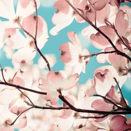 impresion-de-arte-fino-en-lienzo-adorn-ii-by-joy-olivia-pequena-46-x-46-cms