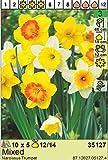Angebot : Narcissus - Narzissen Osterglocken MIX (50)