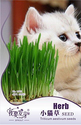 1 paquet d'origine, 220 graines / Pack, Cat Semence à gazon, animaux Green Food # NF536