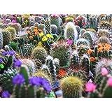 JustSeeds :: Cactus Mix 'Finest Mixed' Succulent Flower 20 Seeds