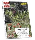 Busch 1203 - Farne und Pilze