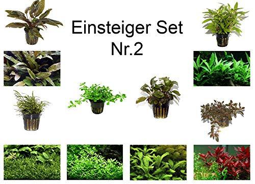 Tropica Einsteiger Set mit 6 Einfachen Topf Pflanzen Aquariumpflanzenset Nr.2 Wasserpflanzen Aquarium Aquariumpflanzen