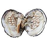 Ovale Süßwasser-Zuchtperle in einer Auster, ideales Geschenk zum Hochzeitstag, Perlengröße: 6-7 mm