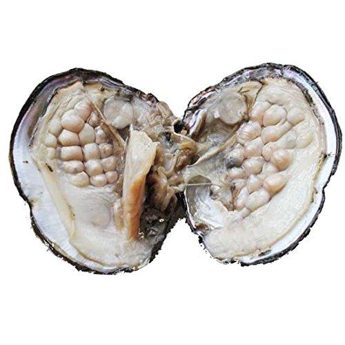 REOAK, ostriche da acquacoltura, con all'interno perle d'acqua dolce ovali da 6-7mm, da donna