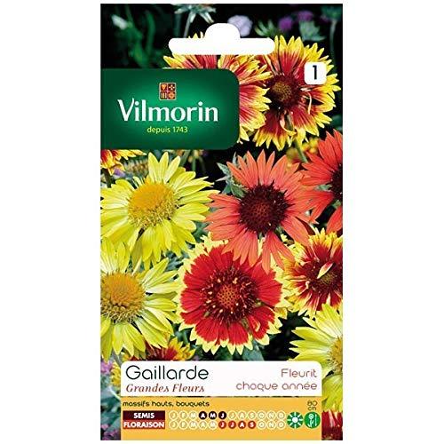 Vilmorin - Sachet graines Gaillarde Grandes fleurs