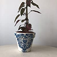 Blue White Damask Terracotta Plant Pot 10cm