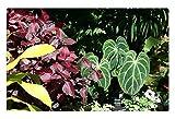 iRocket - Tappeto per Interni – Un Giorno Brillante a Edmonton Garden 42 (60 x 40 cm)