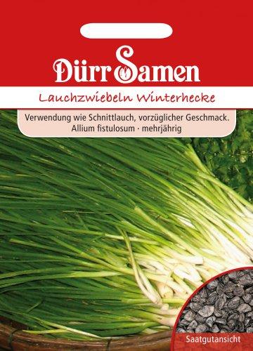 Dürr-Samen Lauchzwiebeln Winterhecke