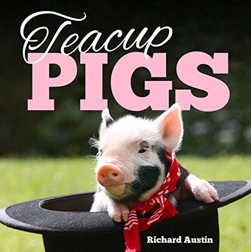 Teacup Pigs -