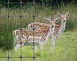 Deer Fencing Net 1.8m x 25m (50mm x 50mm holes) / Garden Netting strong plastic mesh nets / fence