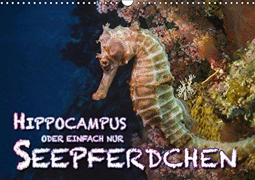 Hippocampus oder einfach nur Seepferdchen (Wandkalender 2019 DIN A3 quer): Seepferdchen sind beim Tauchen schwer zu entdecken und zu beobachten. ... (Monatskalender, 14 Seiten ) (CALVENDO Tiere)