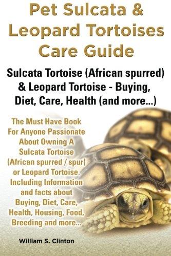 Sulcata the best Amazon price in SaveMoney.es