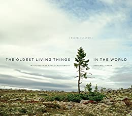 The Oldest Living Things in the World von [Sussman, Rachel]