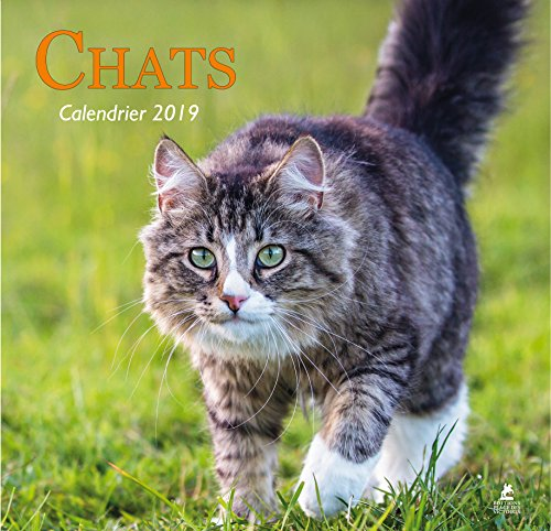 Chats - Calendrier 2019 par Collectif