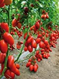 #6: Seedscare San Marzano Tomato Heirloom (Pack Of 30 ),2 Packets