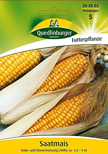 Maissamen – Saatmais von Quedlinburger Saatgut
