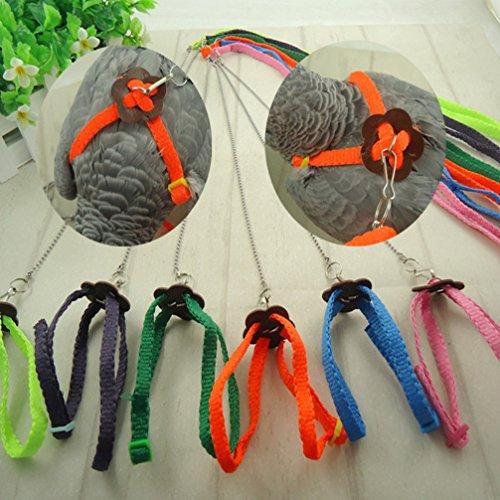LA VIE Hianiquaime Verstellbares Vogelleine Fliegen Ausbildung Seil Outdoor Harness für Kleine Haustiere Vogel Papageien Hamster Ratten Eichhörnchen Orange Rosa Gelb Grün in Zufällige Farbe 120cm