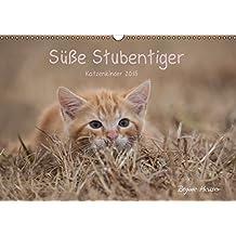 Süße Stubentiger - Katzenkinder (Wandkalender 2015 DIN A3 quer): Katzenkinder 2015 (Monatskalender, 14 Seiten)
