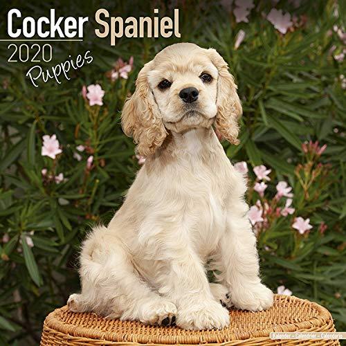 Cocker Spaniel Puppies Calendar 2020 -