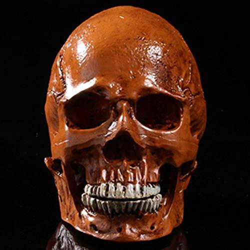 FXQ Lebensgroßer menschlicher Schädel - Realistisches Modell eines menschlichen Schädels aus Kunstharz, Kunstharzmodell Anatomisch-medizinischer Unterricht Ideal für die anatomische - Kopf Auf Einem Tisch Kostüm