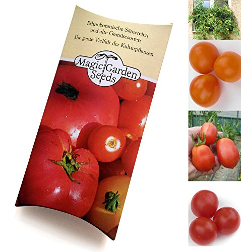 'Buschige Balkon-Tomaten' Samen-Geschenkset mit 4 eher kompakt wachsenden Tomatensorten für Balkon & Terrasse - Orange Cherry-tomaten