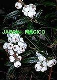 TOMHY Semi Pacchetto: 20Pcs: 10 / 20pcs / Bag s Semi di Bonsai Domestico Fiore GardenB98B